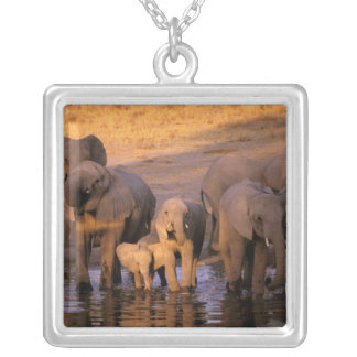 Africa, Kenya, Masai Mara. Elephants (Loxodonta Silver Plated Necklace