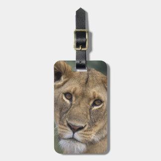 Africa, Kenya, Masai Mara Game Reserve, 2 Bag Tag