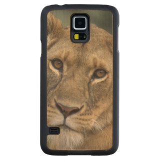Africa, Kenya, Masai Mara Game Reserve, 2 Carved Maple Galaxy S5 Case