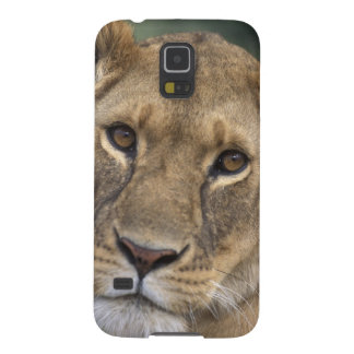 Africa, Kenya, Masai Mara Game Reserve, 2 Case For Galaxy S5