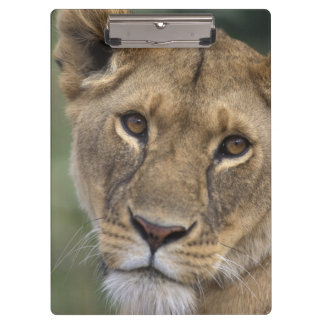 Africa, Kenya, Masai Mara Game Reserve, 2 Clipboard