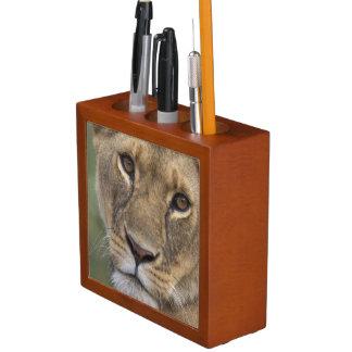 Africa, Kenya, Masai Mara Game Reserve, 2 Desk Organiser