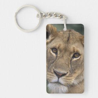 Africa, Kenya, Masai Mara Game Reserve, 2 Double-Sided Rectangular Acrylic Key Ring