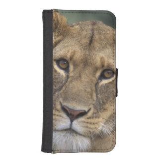 Africa, Kenya, Masai Mara Game Reserve, 2 iPhone SE/5/5s Wallet Case