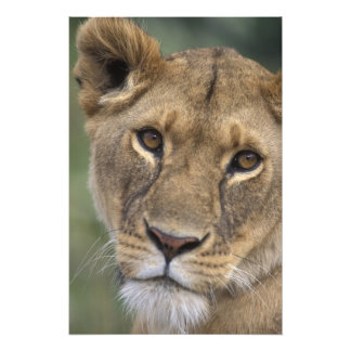 Africa, Kenya, Masai Mara Game Reserve, 2 Photograph