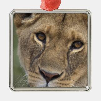 Africa, Kenya, Masai Mara Game Reserve, 2 Silver-Colored Square Decoration