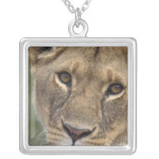 Africa, Kenya, Masai Mara Game Reserve, 2 Silver Plated Necklace