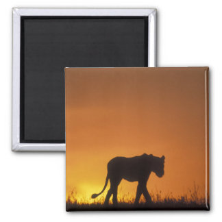 Africa, Kenya, Masai Mara Game Reserve, 3 Refrigerator Magnet