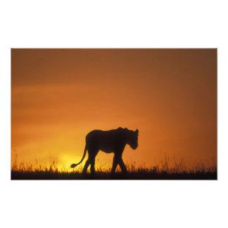 Africa, Kenya, Masai Mara Game Reserve, 3 Photo Print