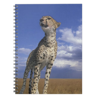Africa, Kenya, Masai Mara Game Reserve, Adult 2 Notebooks