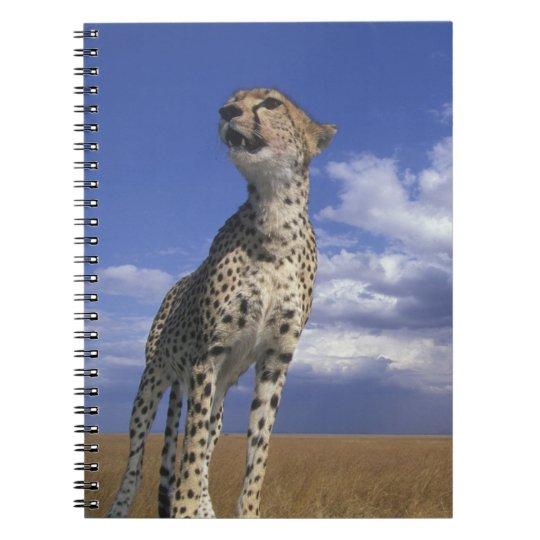 Africa, Kenya, Masai Mara Game Reserve, Adult 2 Notebooks