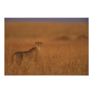 Africa, Kenya, Masai Mara Game Reserve, Adult 2 Poster