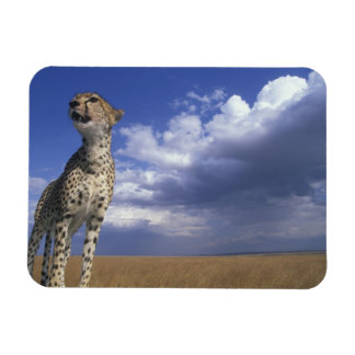 Africa, Kenya, Masai Mara Game Reserve, Adult 2 Rectangular Photo Magnet