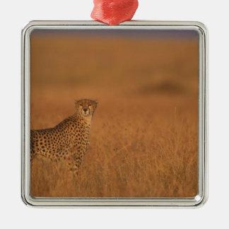 Africa, Kenya, Masai Mara Game Reserve, Adult 2 Silver-Colored Square Decoration