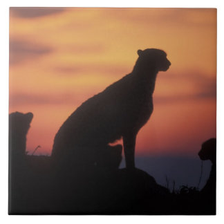 Africa, Kenya, Masai Mara Game Reserve, Adult 3 Tile