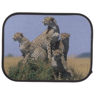 Africa, Kenya, Masai Mara Game Reserve, Adult 4 Car Mat