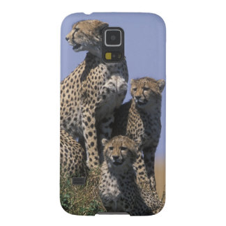 Africa, Kenya, Masai Mara Game Reserve, Adult 4 Cases For Galaxy S5