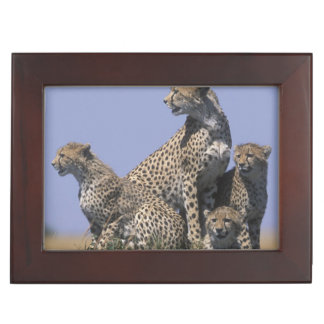 Africa, Kenya, Masai Mara Game Reserve, Adult 4 Keepsake Box