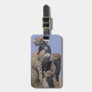 Africa, Kenya, Masai Mara Game Reserve, Adult 4 Luggage Tag
