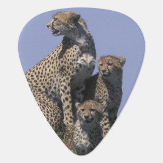 Africa, Kenya, Masai Mara Game Reserve, Adult 4 Plectrum