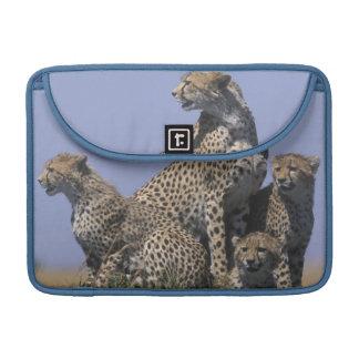 Africa, Kenya, Masai Mara Game Reserve, Adult 4 Sleeve For MacBook Pro