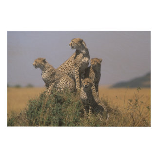 Africa, Kenya, Masai Mara Game Reserve, Adult 4 Wood Wall Decor