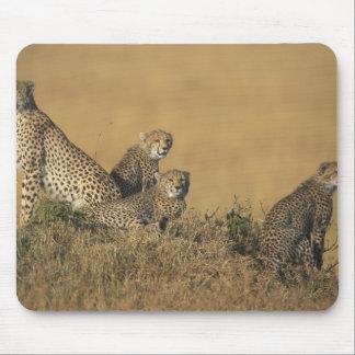 Africa, Kenya, Masai Mara Game Reserve, Adult 5 Mouse Pad