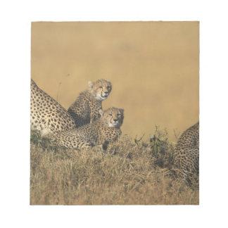 Africa, Kenya, Masai Mara Game Reserve, Adult 5 Notepad
