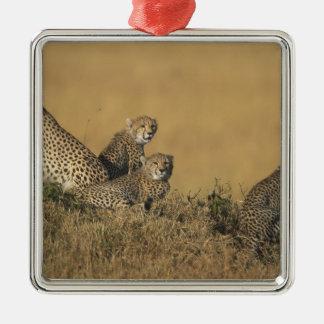 Africa, Kenya, Masai Mara Game Reserve, Adult 5 Silver-Colored Square Decoration