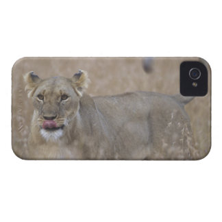 Africa, Kenya, Masai Mara Game Reserve, Adult 6 Case-Mate iPhone 4 Case
