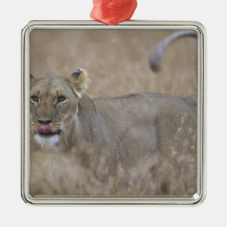 Africa, Kenya, Masai Mara Game Reserve, Adult 6 Christmas Ornament