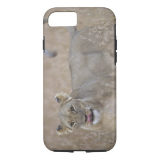 Africa, Kenya, Masai Mara Game Reserve, Adult 6 iPhone 8/7 Case