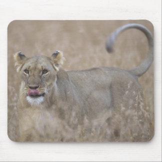 Africa, Kenya, Masai Mara Game Reserve, Adult 6 Mouse Mat