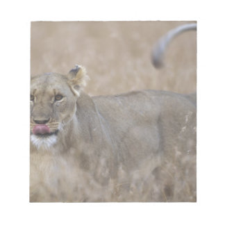 Africa, Kenya, Masai Mara Game Reserve, Adult 6 Notepad
