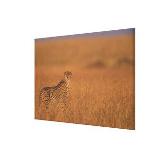 Africa, Kenya, Masai Mara Game Reserve, Adult Canvas Print