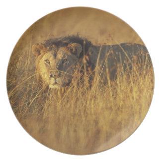 Africa, Kenya, Masai Mara Game Reserve, Adult Plate