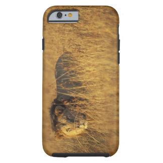 Africa, Kenya, Masai Mara Game Reserve, Adult Tough iPhone 6 Case