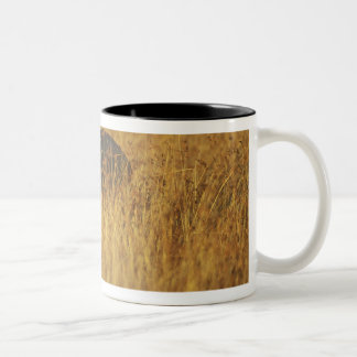 Africa, Kenya, Masai Mara Game Reserve, Adult Two-Tone Coffee Mug