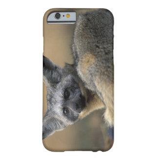 Africa, Kenya, Masai Mara Game Reserve, Bat Barely There iPhone 6 Case