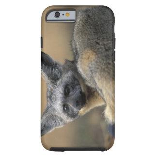 Africa, Kenya, Masai Mara Game Reserve, Bat Tough iPhone 6 Case