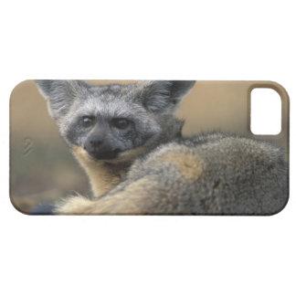 Africa, Kenya, Masai Mara Game Reserve, Bat iPhone 5 Cover