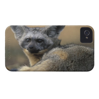 Africa, Kenya, Masai Mara Game Reserve, Bat Case-Mate iPhone 4 Cases
