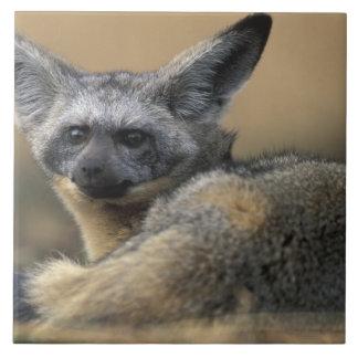 Africa, Kenya, Masai Mara Game Reserve, Bat Large Square Tile
