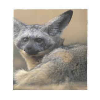 Africa, Kenya, Masai Mara Game Reserve, Bat Notepad