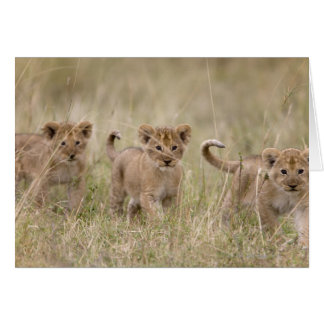 'Africa, Kenya, Masai Mara Game Reserve' Card