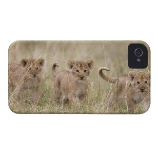 'Africa, Kenya, Masai Mara Game Reserve' Case-Mate iPhone 4 Case
