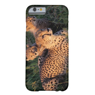 Africa, Kenya, Masai Mara Game Reserve. Cheetah 2 Barely There iPhone 6 Case