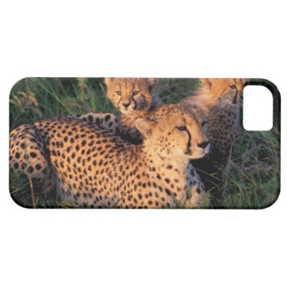 Africa, Kenya, Masai Mara Game Reserve. Cheetah 2 Case For The iPhone 5