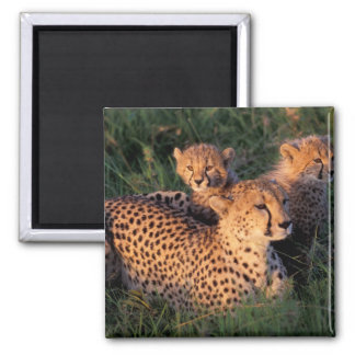 Africa, Kenya, Masai Mara Game Reserve. Cheetah 2 Fridge Magnet