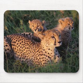 Africa, Kenya, Masai Mara Game Reserve. Cheetah 2 Mouse Mat